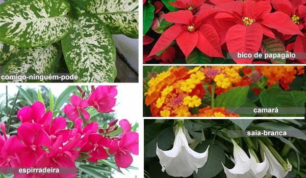 Plantas venenosas os perigos e o que fazer em caso de - Plantas venenosas de interior ...